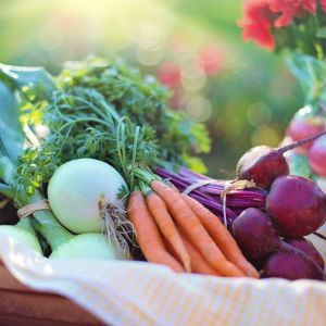 PionerProdukt / ПионерПродукт - На российском рынке стремительно дешевеют свекла и морковь
