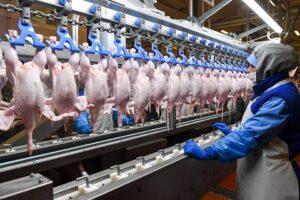 PionerProdukt / ПионерПродукт - Экспортные цены на мясо птицы в 2021 году - статистика и анализ за январь-май
